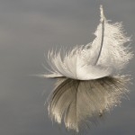 Feather artistic reflection